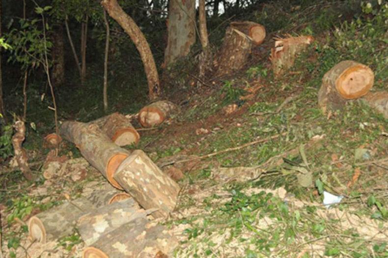 Inside chaotic Kajo Keji logging disputes